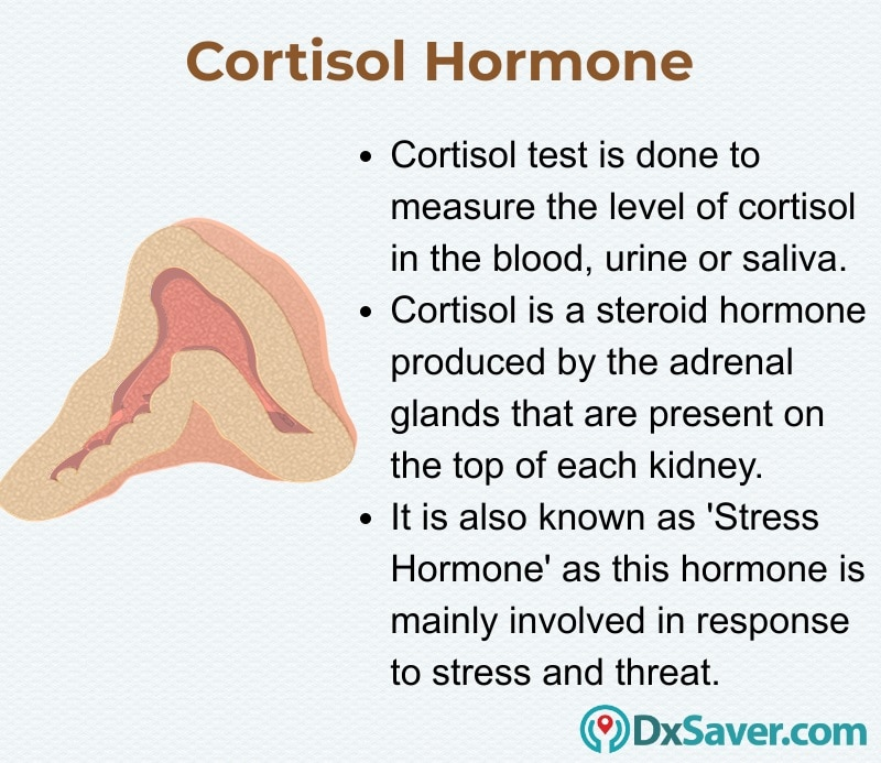 Know more about the cortisol hormone and the importance of cortisol hormone.