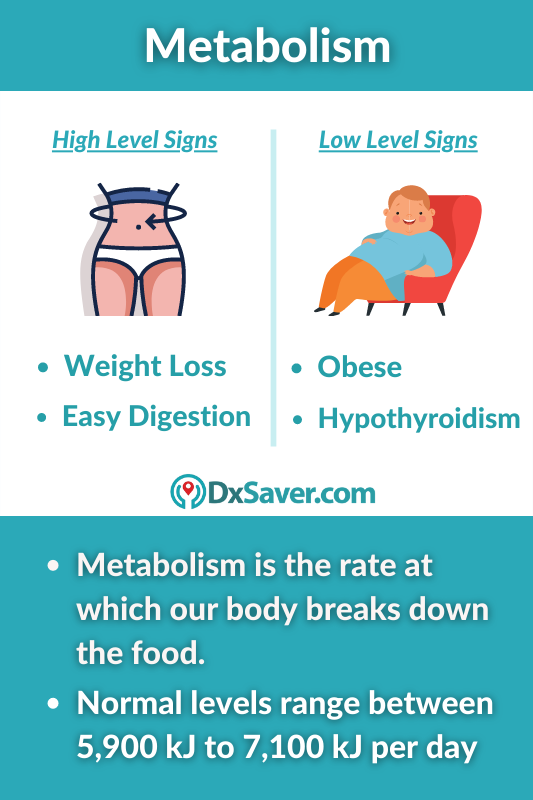 High and Low Levels of Metabolism Levels in Men and Women
